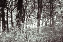 portlandgrass7.17.17.18